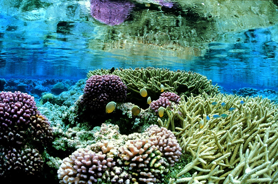 Underwater view of colorful corals (© AP Images)
