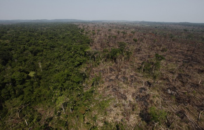 the effects of deforestation in fiji Essays on the effects of deforestation in fiji search results effects of deforestation effects of deforestation the subject of deforestation and the effects that it has on the.