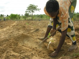 Person planting tree in dry ground (Courtesy of Komaza)