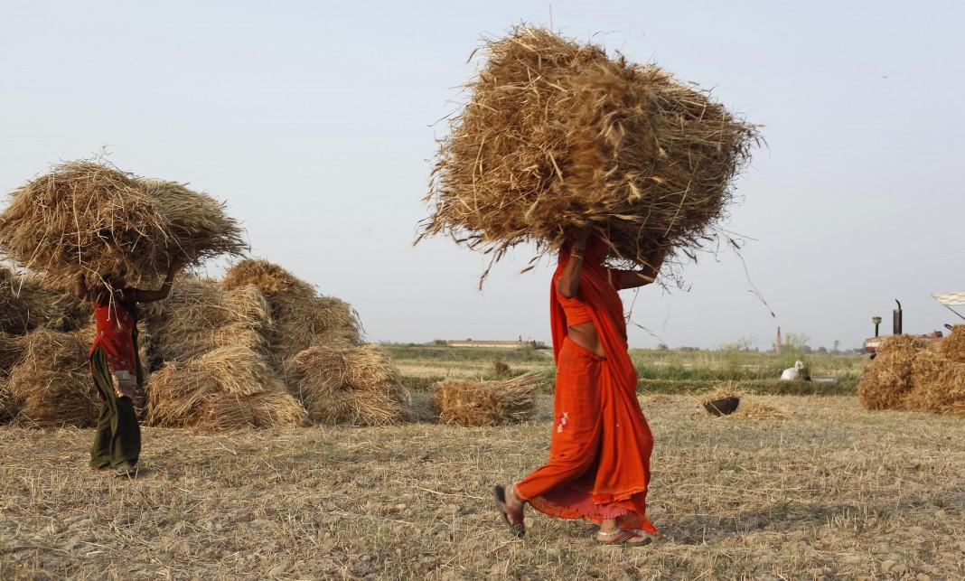 Agricultores cargan fardos de trigo (© AP Images)