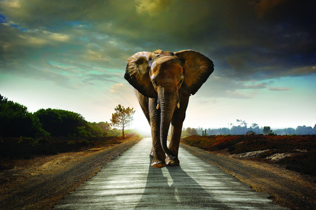 Elephant walking on a road (Carlos Caetano/Shutterstock.com)