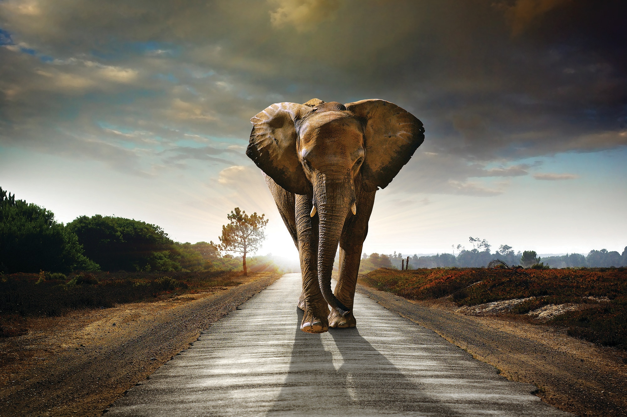 top 10 ways to save wildlife shareamerica elephant walking on a road carlos caetano shutterstock com
