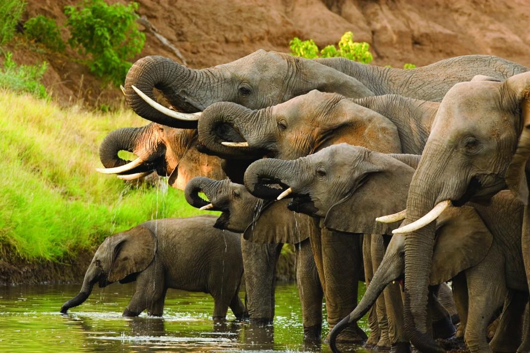 animais na água