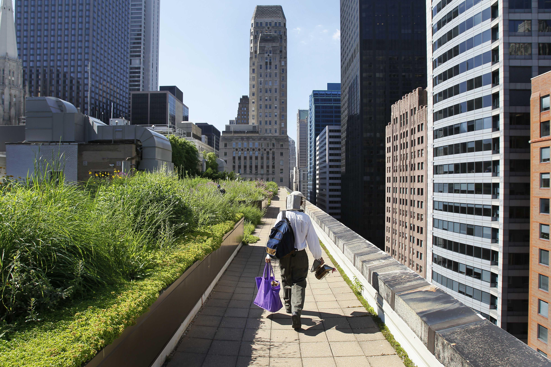 Man walking along rooftop garden (© AP Images)