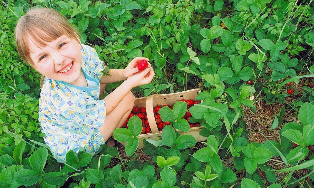 Comment gagner sa vie avec l agritourisme - Comment cueillir des fraises ...