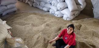 Dulce Marlen Contreras assise sur un tas de grains de café (© Gilvan Barreto/Oxfam)
