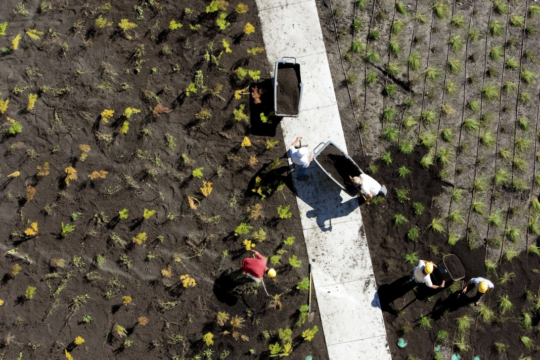 Aerial view of group of people planting shrubs (© Getty Images)