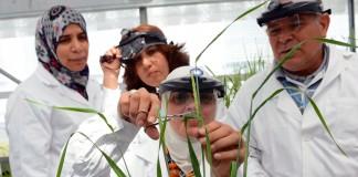 Une scientifique en train de couper une plante, avec trois de ses collègues à l'arrière-plan (Dean Calma/IAEA)
