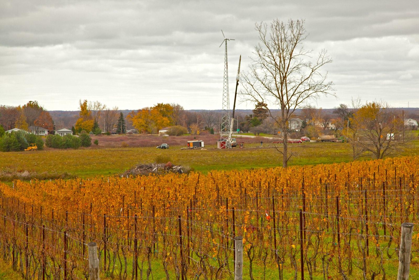 Une éolienne et un vignoble (Robin & Duncan Ross/Arrowhead Spring Vineyards)