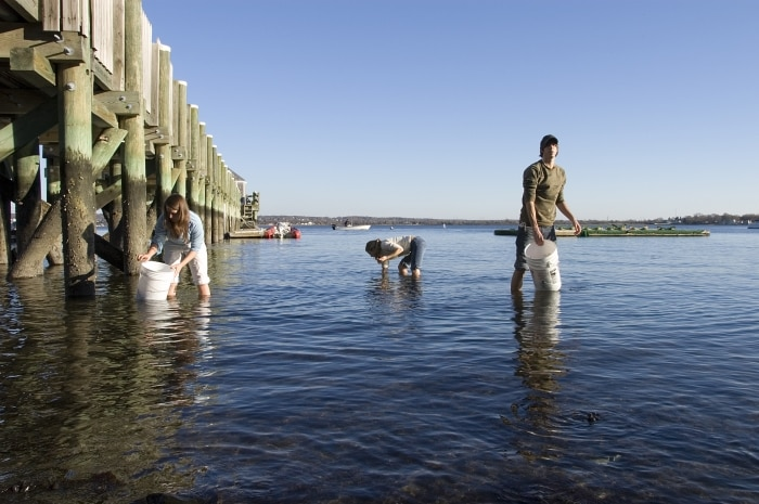 Trois personnes en train de prélever des échantillons dans des eaux peu profondes près d'une jetée. (Roger Williams University)