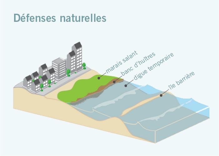 Graphique montrant diverses défenses naturelles contre la montée des eaux (marais salant, banc d'huîtres, digue temporaire, île barrière) (Adapté d'images de la NOAA)