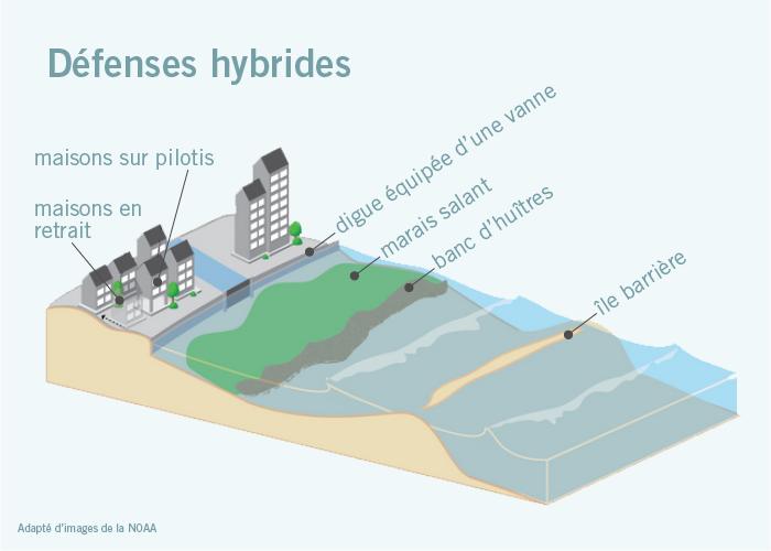 Graphique montrant diverses mesures de protection, dites hybrides, contre la montée des eaux (maisons en retrait, maisons sur pilotis, digue avec vanne, marais salant, banc d'huîtres, île barrière) - (Adapté d'images de la NOAA)