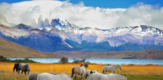 سب ها در کنار یک دریاچه می چرند و کوهستان های پوشیده از برف نیز در پس زمینه تصویر دیده می شوند (Shutterstock/ kavram)