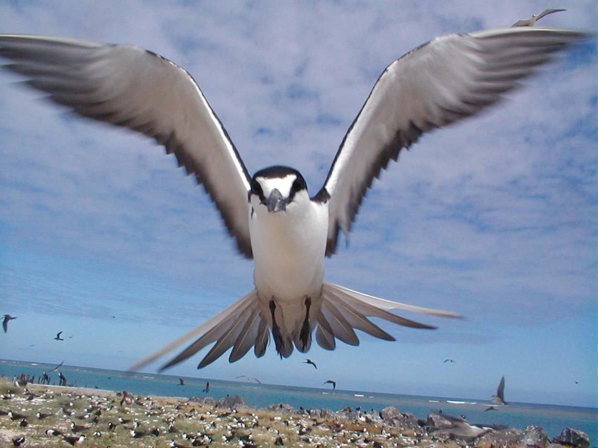 Un oiseau survolant un terrain couvert de nombreux oiseaux, en bordure de mer. (© AP Images)