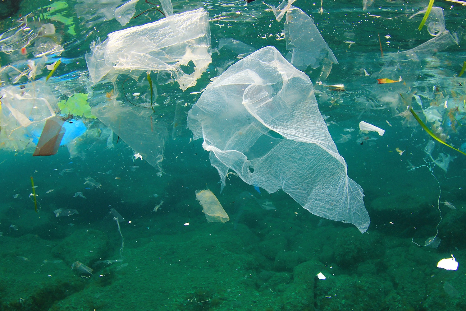 Plastic bags and jellyfish - Want To Preserve The World S Oceans Do This Shareamerica