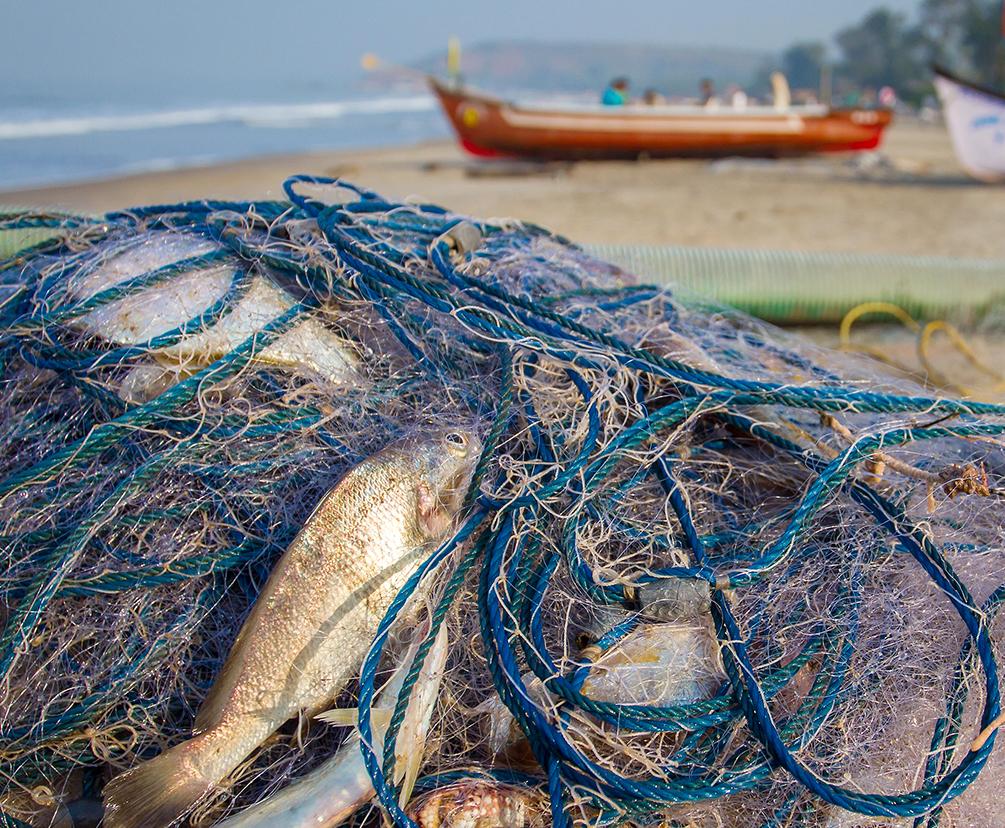 Dead fish inside pile of nets sitting on beach (Shutterstock)