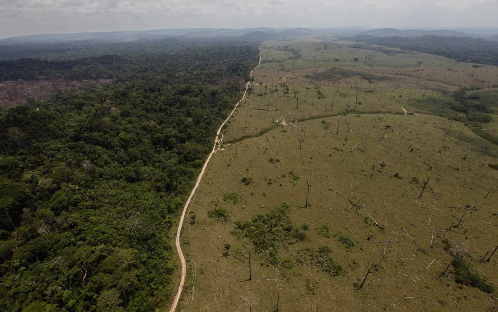 كل هذه الأراضي كانت غابات مطرية