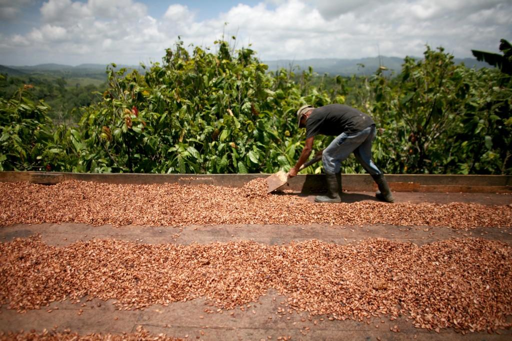زراعة الكاكاو المستدامة مع المحافظة على أراضي المراعي