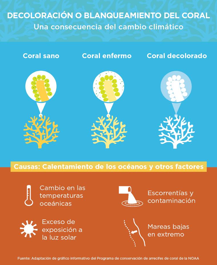 Gráfica informativa de la decoloración de los arrecifes de coral (Departamento de Estado)