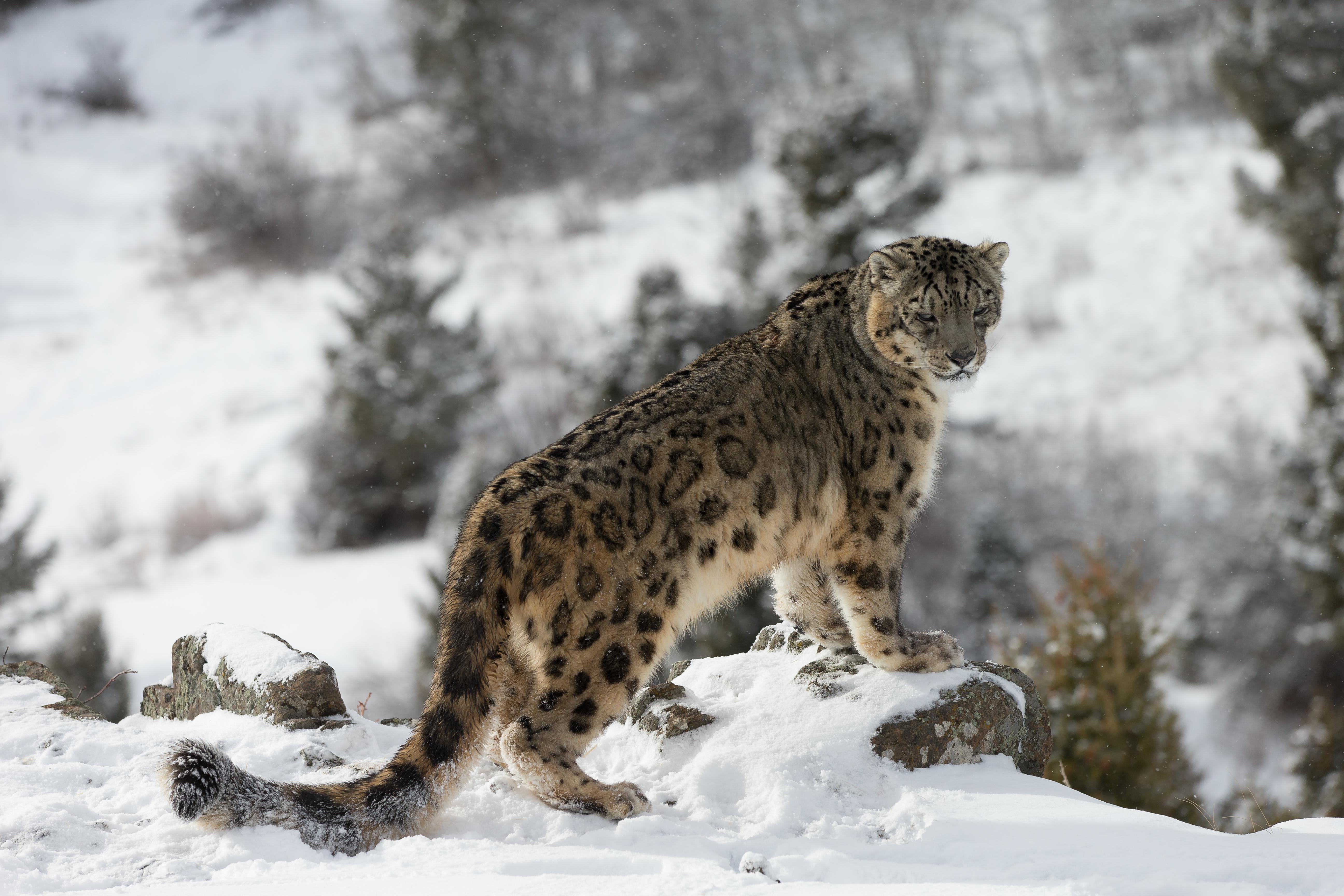 tererro cougars personals San ysidro cougars san ysidro cougars.