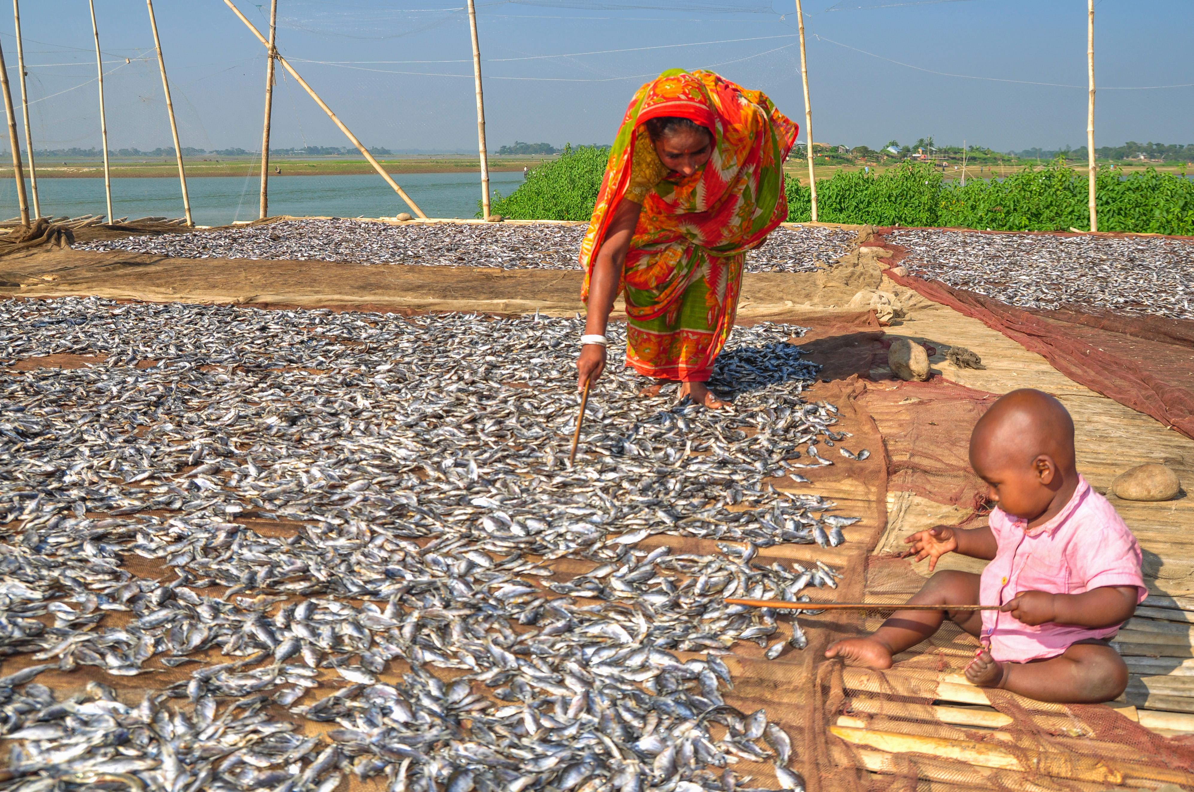 امرأة تجفف سمكا على حصيرة بينما يراقبها طفل (Flickr/USAID/WorldFish Bangladesh/Balaram Mahalder)