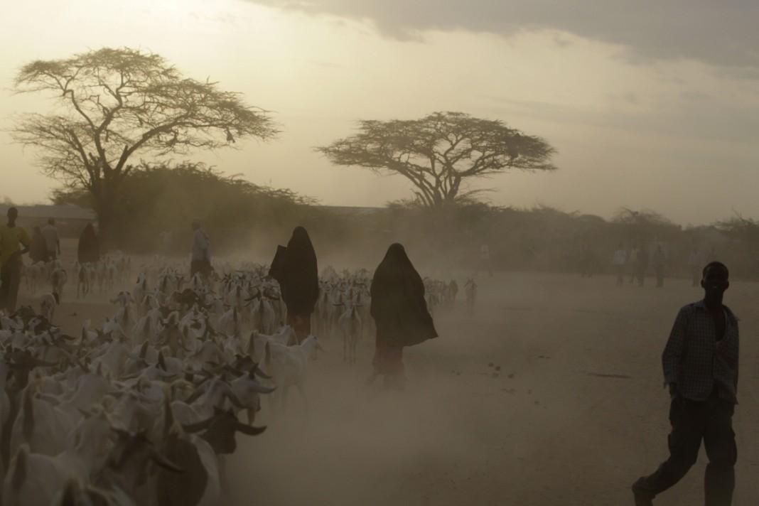 Des hommes et des femmes qui gardent des chèvres dans une zone aride