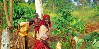دو زن کشاورز در حال شخم زدن مزرعه هستند در حالی که مردان آنها را تماشا می کنند (پیکولد/شاتراستاک)