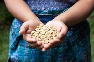 دست هایی که بذر نگه داشته اند (عکس از شاتراستاک)