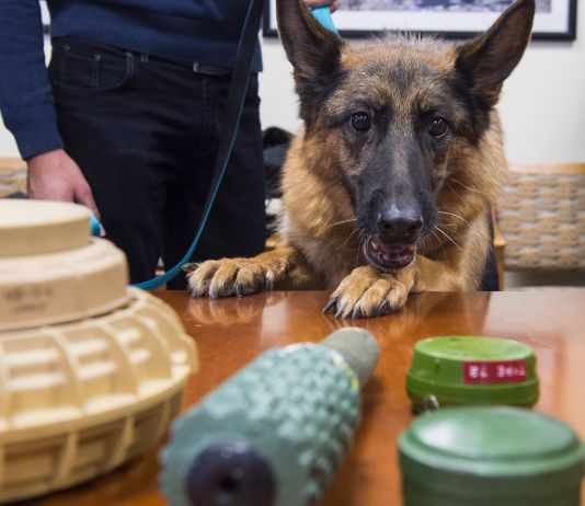 Dog looking at detection training tools (© Saul Loeb/AFP/Getty Images)