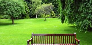 公园中的长椅及后面的草地和树木(© Shutterstock)