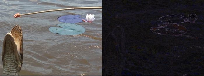 Left: Alligator grabbing piece of meat on stick, lily pad behind it. Right: Darker version of this image, with only lily pad outlined in purple. (State Dept.)