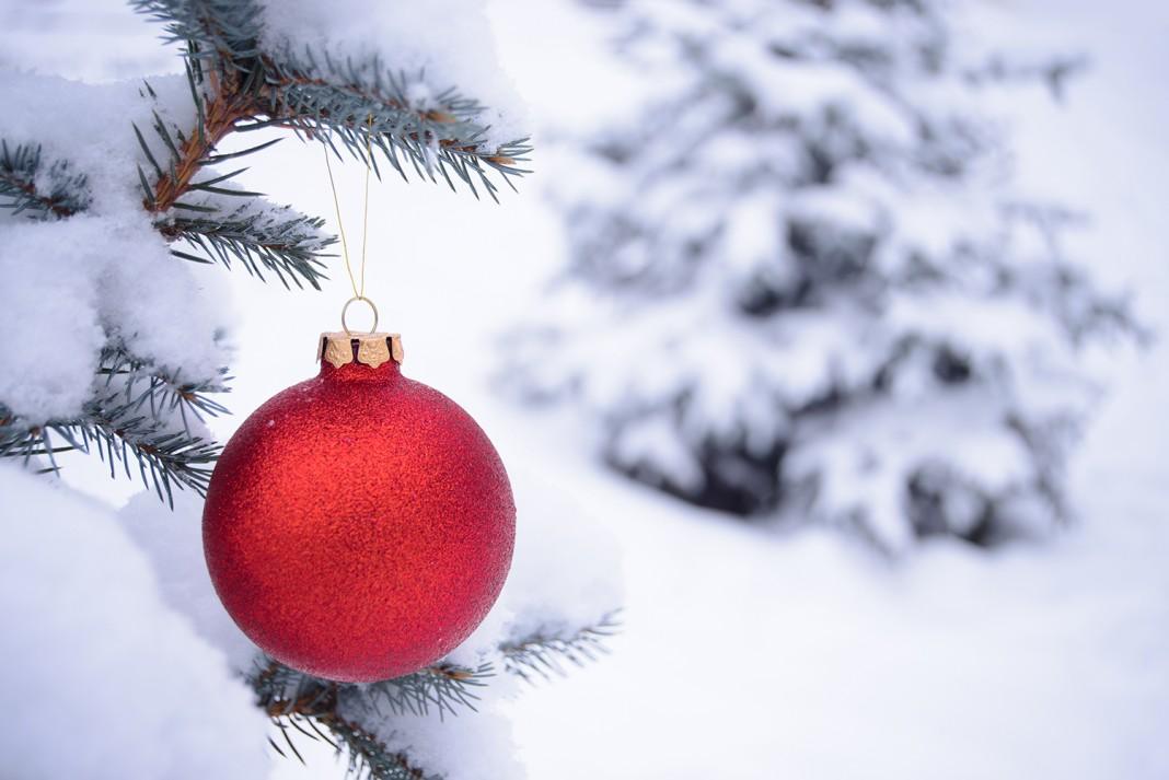 Красный рождественский шар на заснеженной елке (Shutterstock)