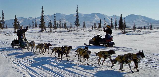 Un attelage de chiens tire un traîneau sur la neige (Bureau de gestion du territoire)