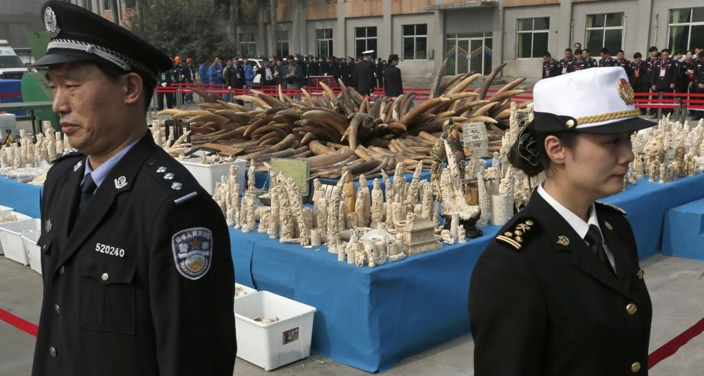 Agentes de la aduana de China vigilando marfil incautado (© AP Images)