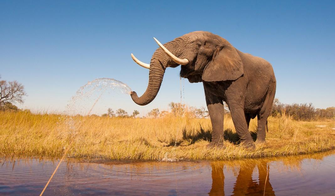 فیلی که نزدیک یک دریاچه ایستاده است. (Shutterstock)