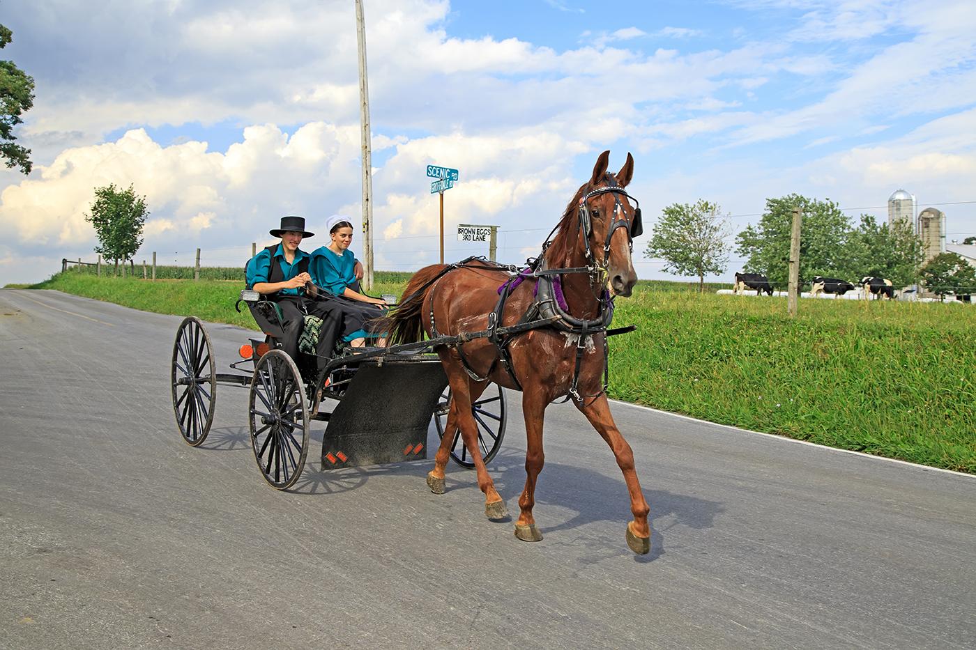 Casal anda em charrete puxada por cavalo (Shutterstock)