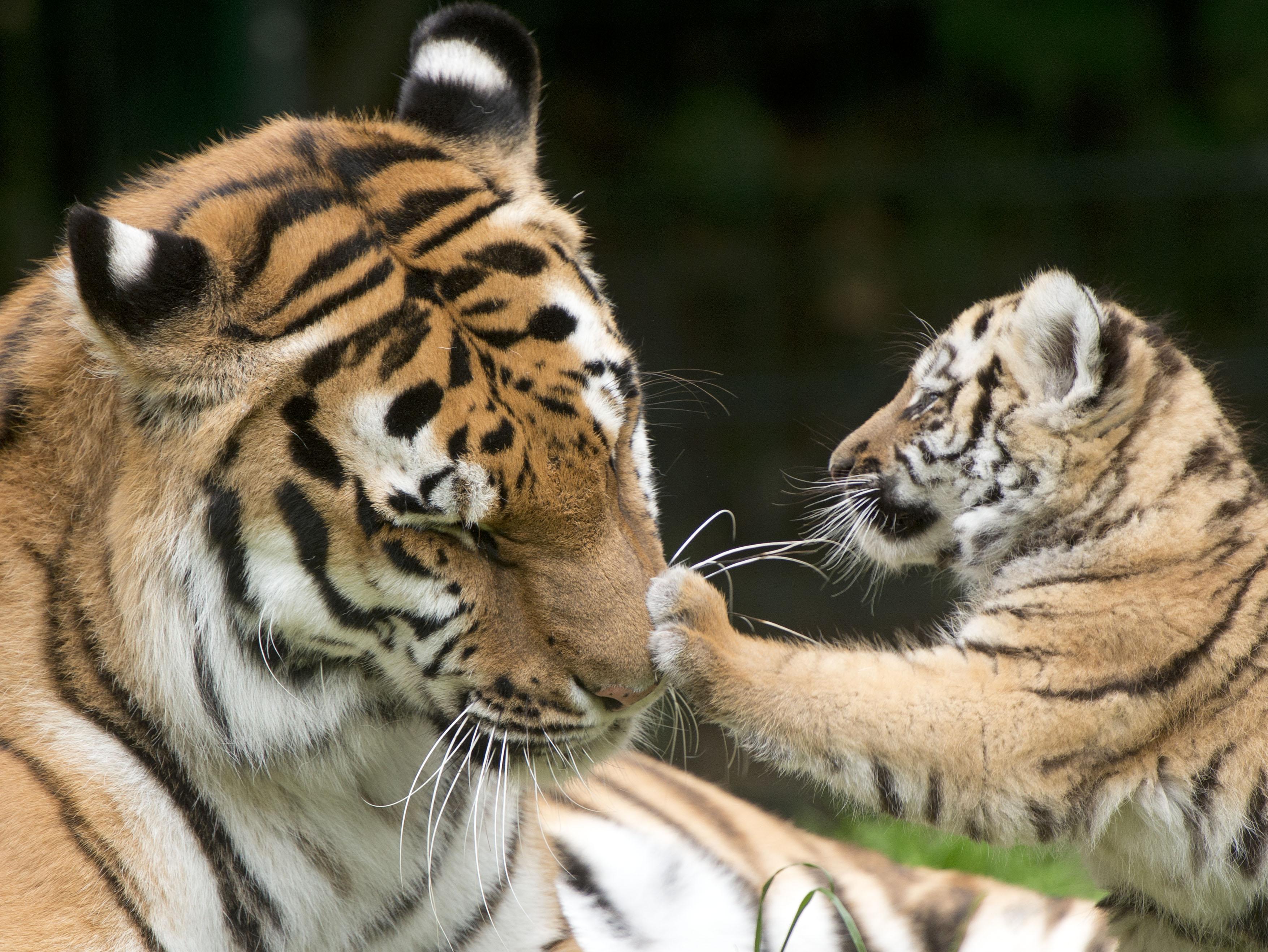La survie de ces animaux pourrait tenir un accord commercial - Image bebe animaux ...