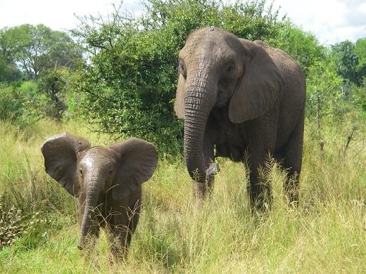 elephanttpp