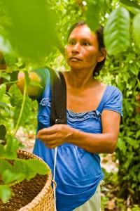Женщина-фермер собирает гуаюсу (Courtesy of Runa)