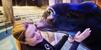 Sea lion kissing a trainer on the cheek (© AP Images)