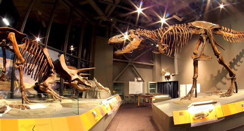 Two dinosaur skeletons on display (State Historical Society of North Dakota)