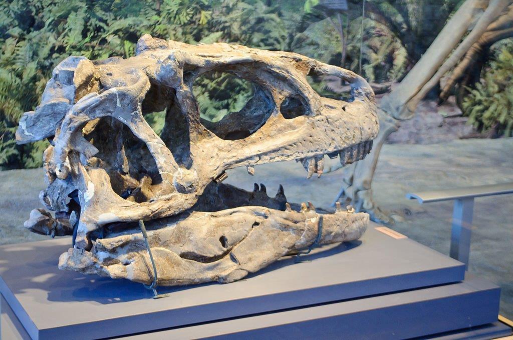 Cráneo de allosaurus en un pedestal (InSapphoWeTrust/Creative Commons)