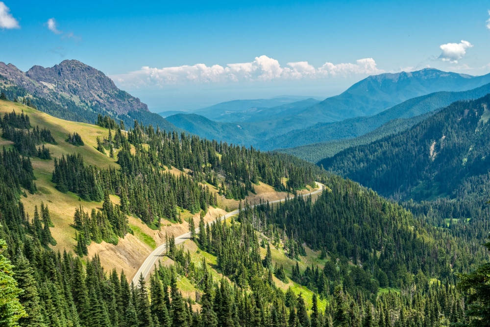 Trees and mountains (Shutterstock)