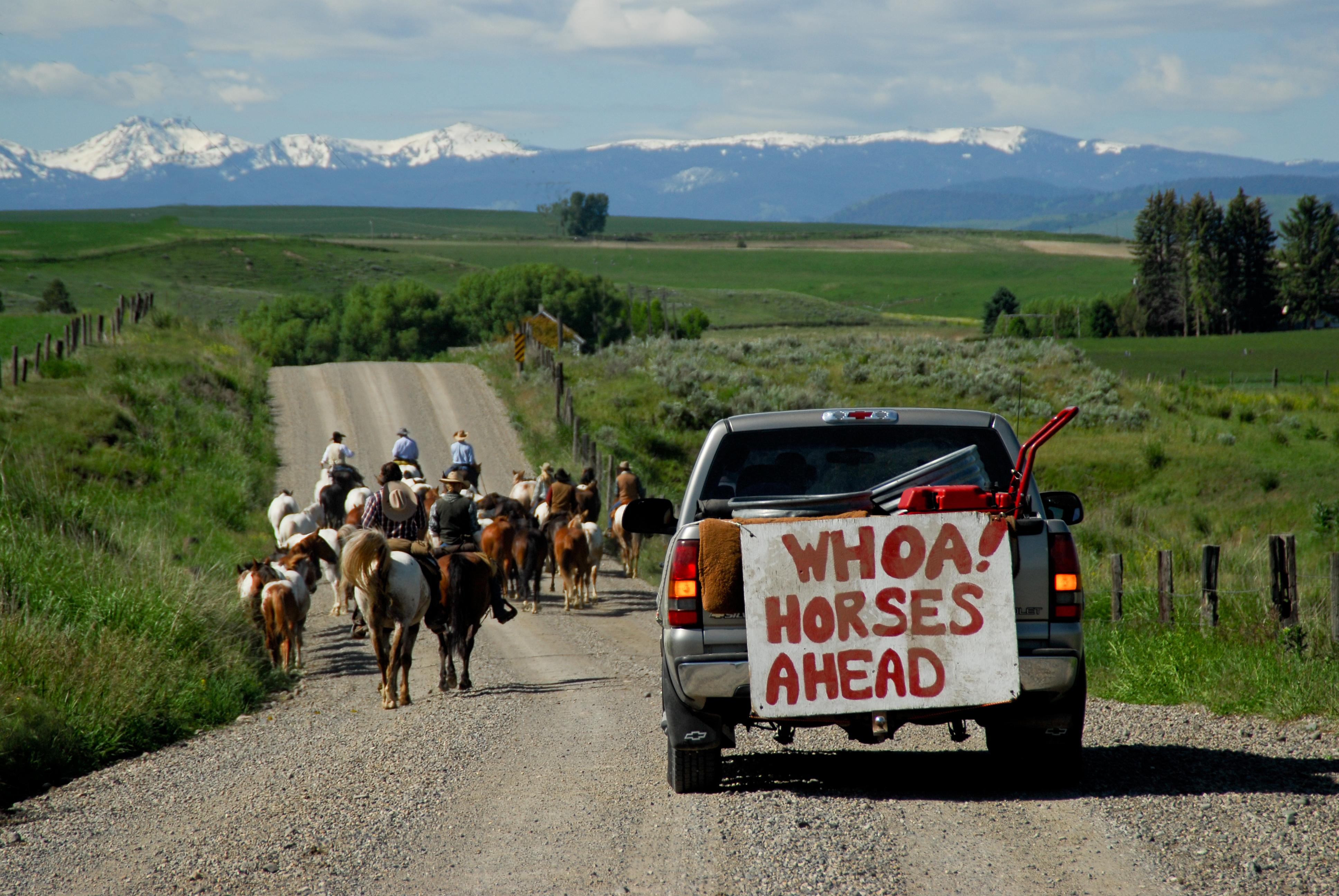 """یک کامیون با تابلویی که روی آن نوشته شده است """"آهای! جلوتر اسب ها [در جاده] هستند"""" پشت گروهی از مردم که سوار بر اسب در جاده پیش می روند، در حرکت است (عکس تقدیمی از دفتر گردشگری مونتانا)"""