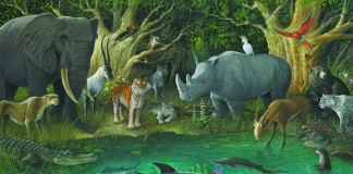 Illustration of animals in forest (State Dept./Illustration by Phil Parks)