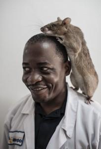 Una rata en el hombro de un técnico de laboratorio (© Maarten Boersema)