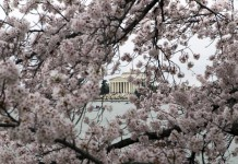 Classical building seen through cherry blossoms on branches (© AP Images)