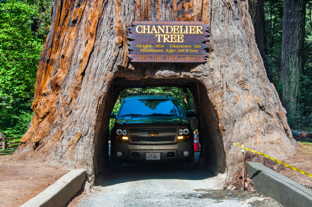 Car driving through the hollowed base of a redwood tree (Shutterstock)