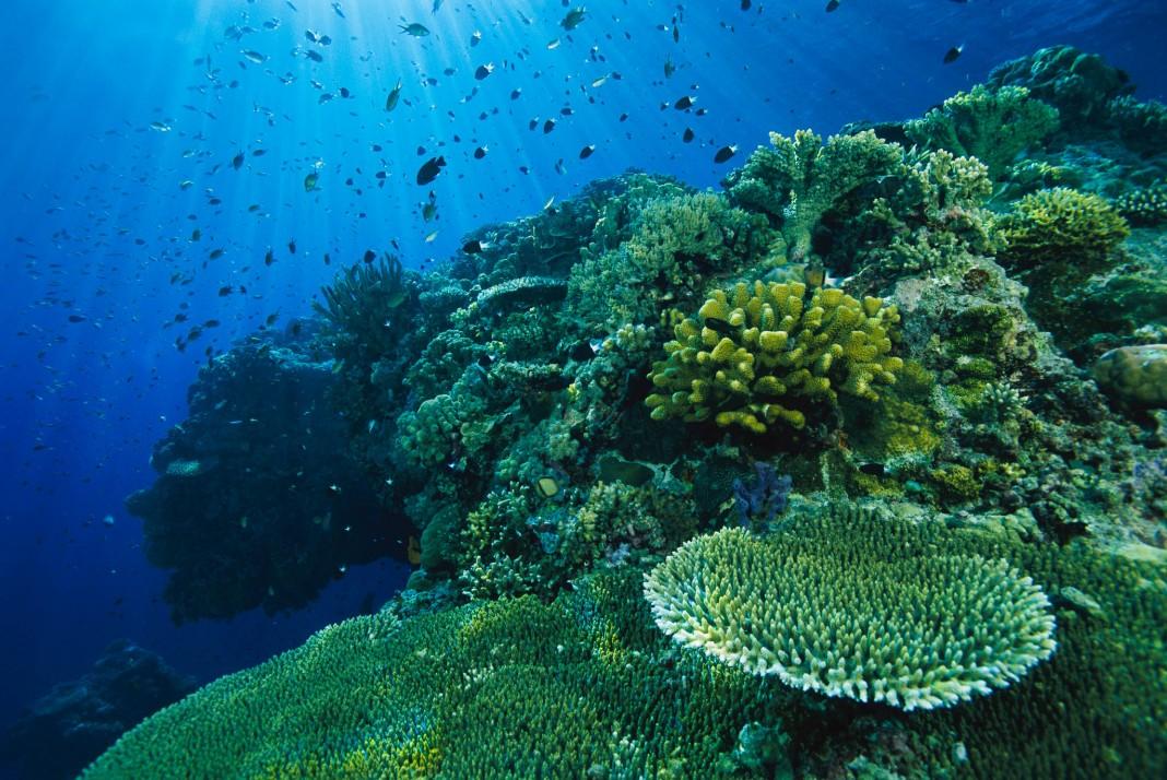 Peixe nadando perto de recife de corais (© National Geographic Creative/Tim Laman)