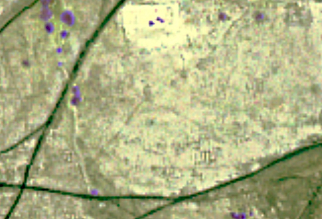 Imagem de satélite fora de foco mostra pontos roxos e linhas verdes (Cortesia: Sarah Parcak)